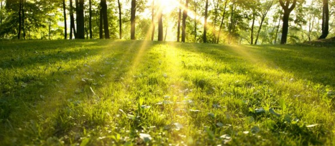 Sunlight,In,The,Green,Forest,,Spring,Time